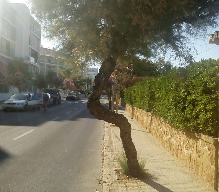 arbol-en-la-avenida-ultramar-768x674